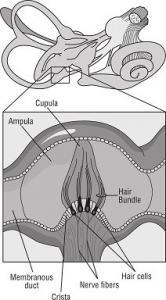 tłumaczenia medyczne laryngologia