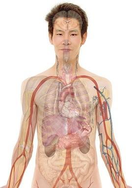Tłumaczenia medyczne nefrologia