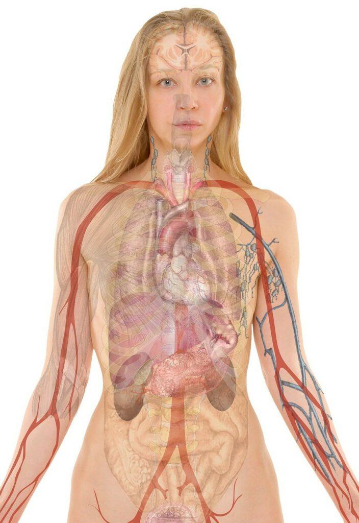 Tłumaczenia Gastroenterologia gastrologią